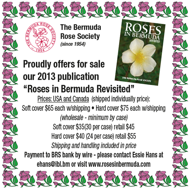 image0011 Welcome to the Bermuda Rose Society Website